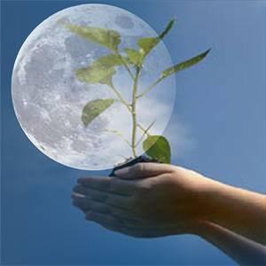 Лунный календарь посадки растений