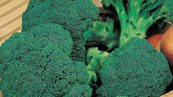 Лучшие сорта капусты брокколи для средней полосы