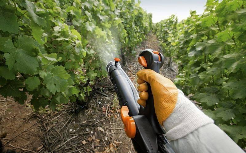 Когда опрыскивать виноград железным купоросом