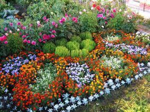 Цветы которые растут на клумбе