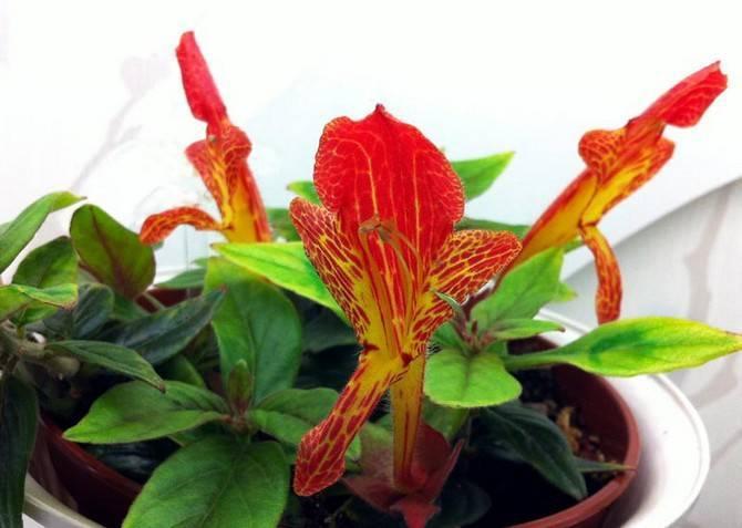 Большой красный цветок
