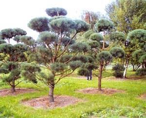 Питомник агро каширский район