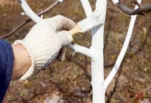 Осенняя обработка деревьев от вредителей и болезней