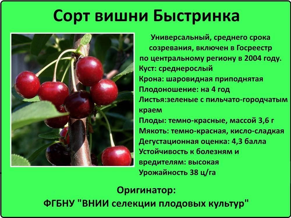Черешня в нижегородской области