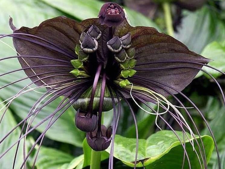 Удивительная красота растений картинки