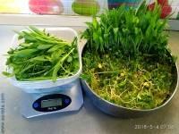 Микрозелень семена