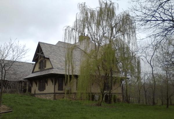 Какое дерево лучше посадить возле дома