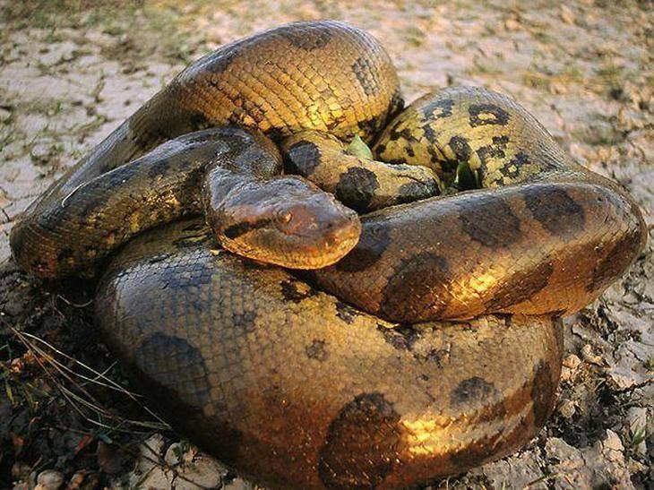 Какие бывают змеи