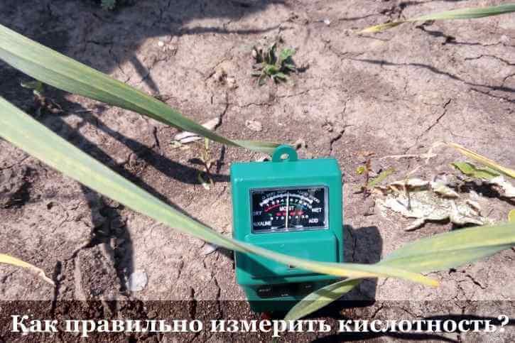 Как определить кислотность почвы по сорнякам фото