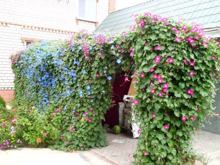 Красивоцветущие цветы для сада