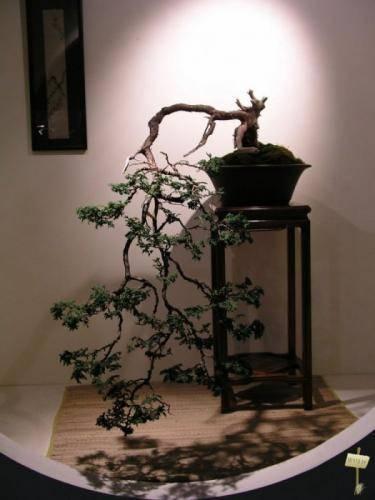 Деревья японии