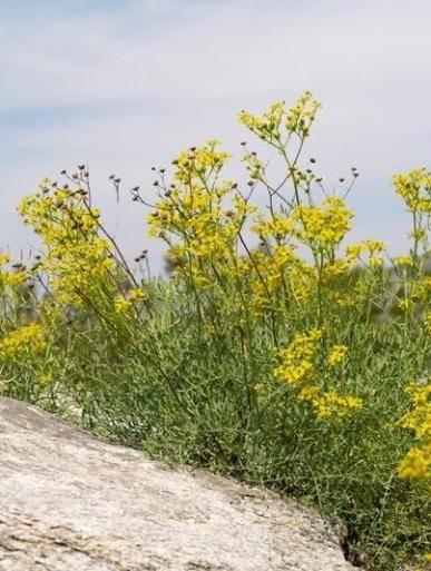 Полезные травы фото и названия