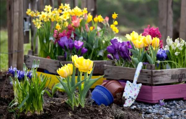 Многолетники на даче цветущие все лето