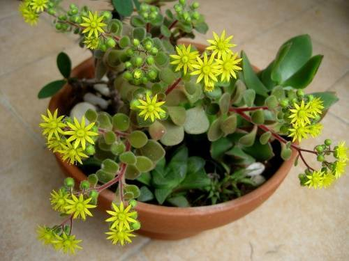 Какие комнатные растения должны быть в квартире