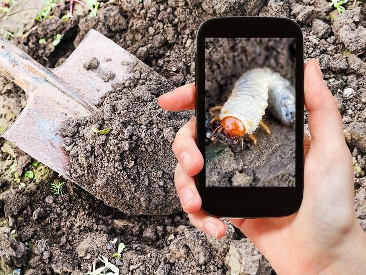 Что делает почву плодородной