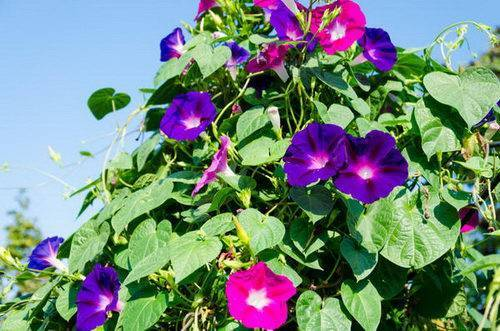 Однолетние цветы для дачи (65 фото названия садовых однолетников для