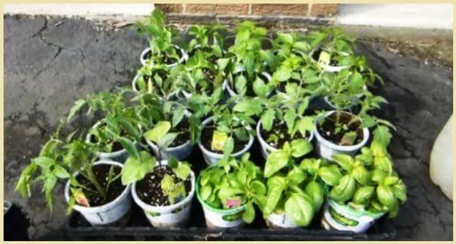 Советы дачнику и огороднику сад и огород