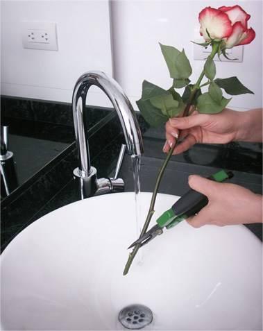 Букет роз чтобы дольше стоял, букеты cvetok доставкой