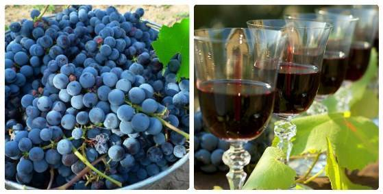 Домашнее вино из синего винограда рецепт