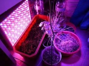Красная лампа для растений