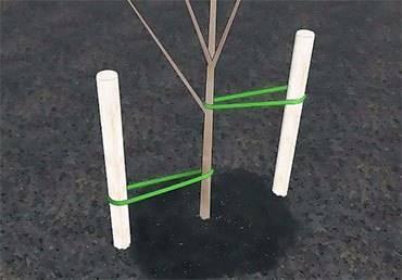 Яблоня весна описание фото