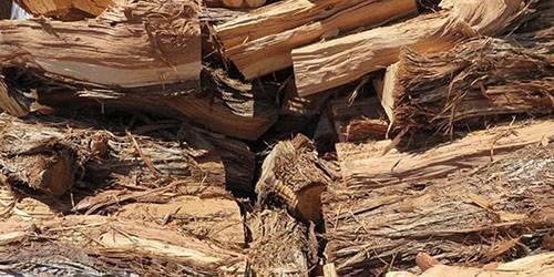 Тополь как дрова