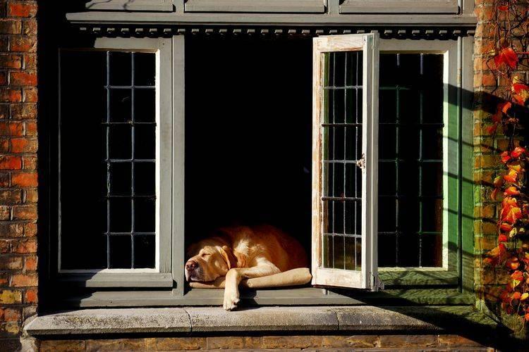 Содержание собаки в частном доме