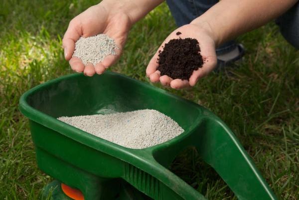 Выращивание садовой ежевики