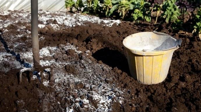 Сколько нужно извести для раскисления почвы