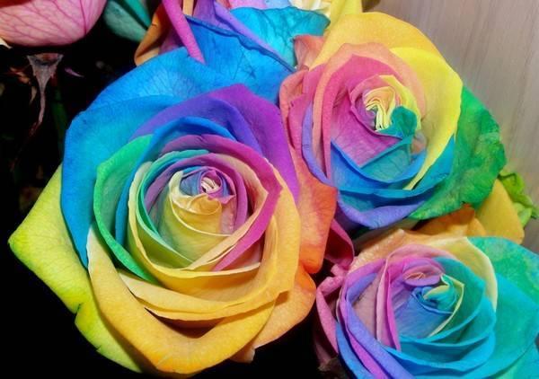 Как сделать радужную розу
