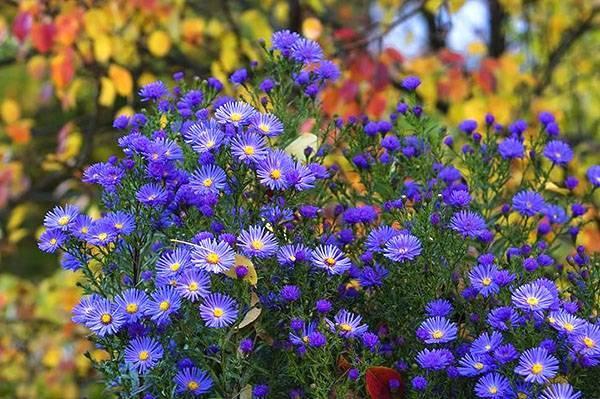 Цветы на грядке фото