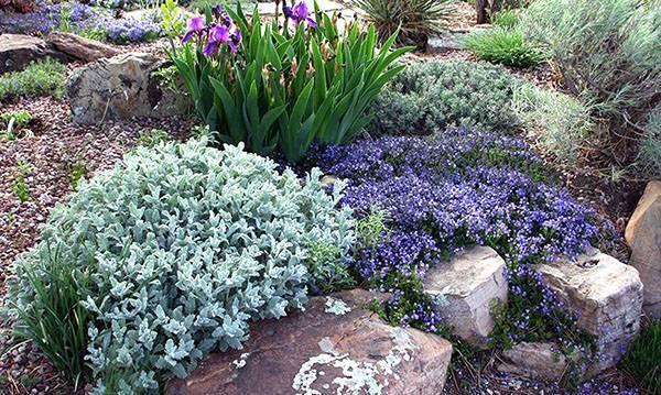 Ирисы садовые