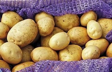 Ранние сорта картошки