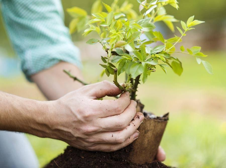 Правильная посадка деревьев на участке