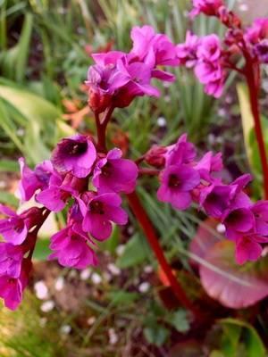 Дикие растения фото и названия