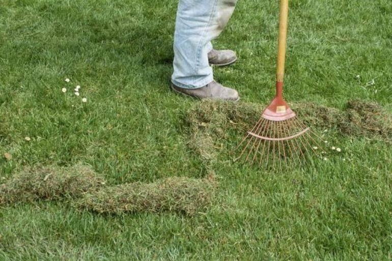 Как удалить мох на участке