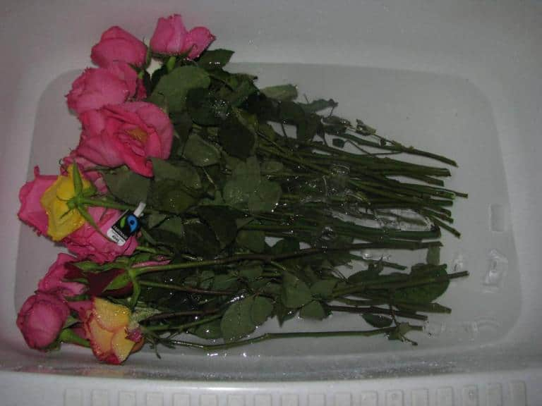 Во что поставить розы чтобы дольше стояли