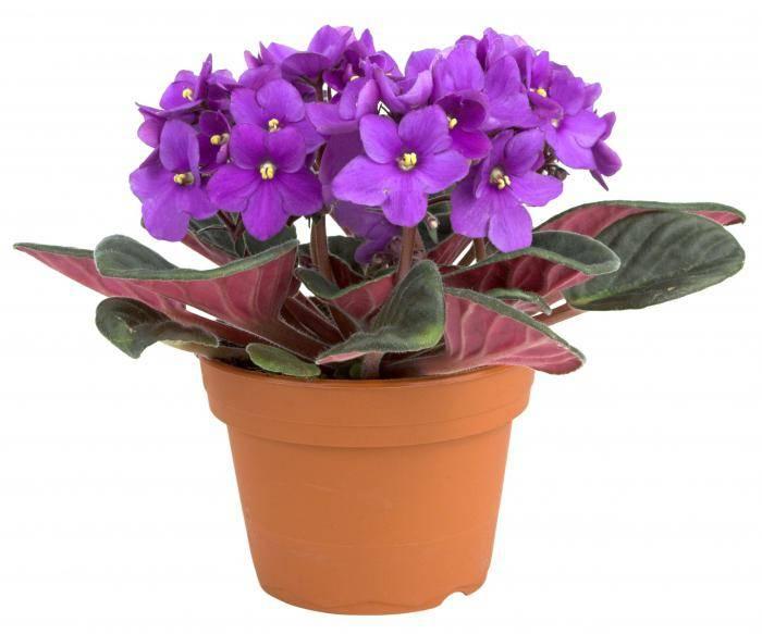Цветок с большими зелеными листьями фото