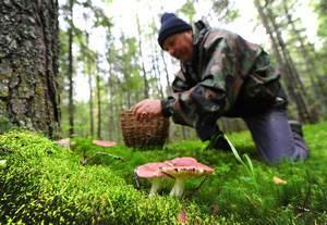 В какое время года появляются грибы