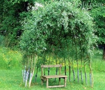 Беседки из стволов деревьев фото