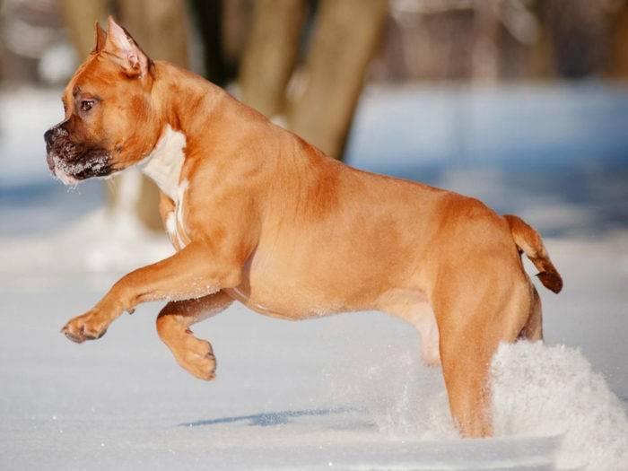 Породы собак охранников дома