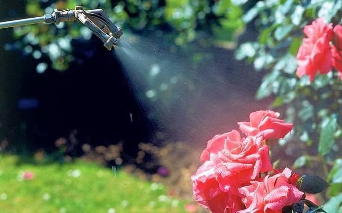 Эпин для роз