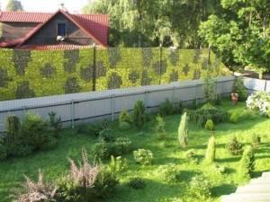 Какими растениями отгородиться от соседей по даче