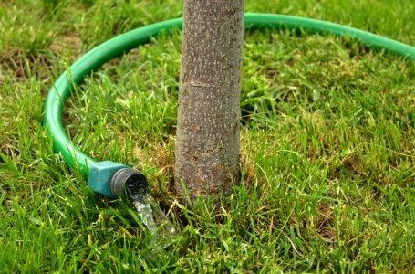Как поливать плодовые деревья осенью?