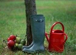 Нужно ли поливать плодовые деревья осенью