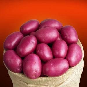 Необычные сорта картофеля