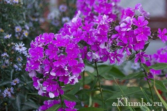Красивые растения для сада фото и названия