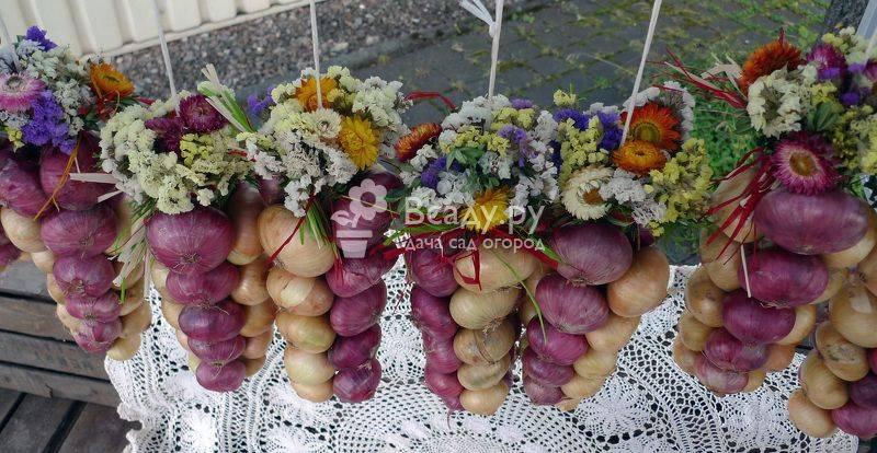 Сладкие салатные сорта лука для хранения заплетают в косы