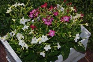 Цветы для полутени названия и фото