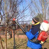 Чем опрыскивать плодовые деревья осенью от вредителей